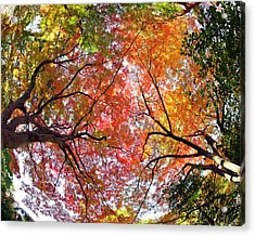 Autumn Color Acrylic Print by Shuya Seno Photography