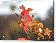 Autumn Colors-arkansas Acrylic Print by Douglas Barnard