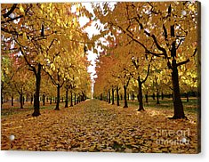 Autumn Colors At He's Best Acrylic Print