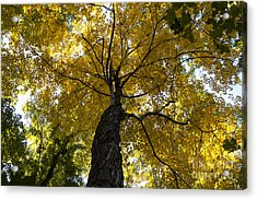 Autumn Colors Acrylic Print by Darleen Stry