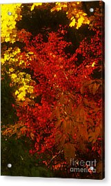 Autumn Colors Acrylic Print by Jeff Breiman