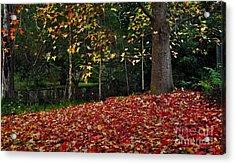 Autumn Colors Acrylic Print by Kaye Menner