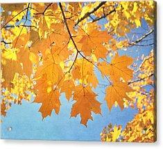 Autumn Colors Acrylic Print by Kim Hojnacki