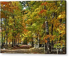 Autumn Colors Acrylic Print by Rodney Campbell