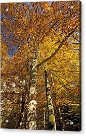Autumn Colour Acrylic Print by Bob Gibbons