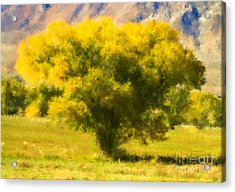 Autumn Cottonwood Acrylic Print
