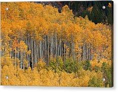 Acrylic Print featuring the photograph Autumn Curtain by Jim Garrison