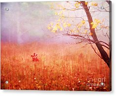 Autumn Dreams Acrylic Print by Darren Fisher