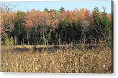Autumn Field And Pine Acrylic Print by Loretta Pokorny