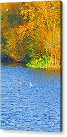 Autumn Flight Acrylic Print by Bai Qing Lyon