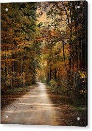 Autumn Forest 3 Acrylic Print by Jai Johnson
