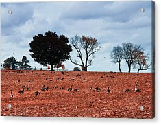 Autumn Geese Acrylic Print by Bill Cannon