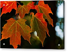 Acrylic Print featuring the photograph Autumn Glory by Cheryl Baxter
