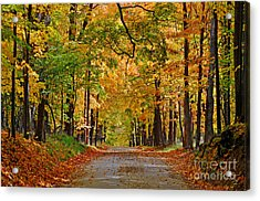 Autumn Gold Acrylic Print by Rodney Campbell
