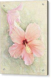 Autumn Hibiscus Acrylic Print