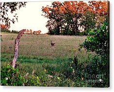 Autumn Hunt Acrylic Print by Marilyn Smith