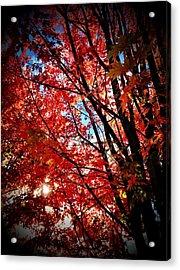 Autumn Hymn Acrylic Print by Anna Bree
