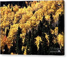Autumn In Colorado Painting Acrylic Print