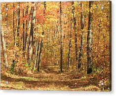 Acrylic Print featuring the photograph Autumn In Minnesota by Penny Meyers
