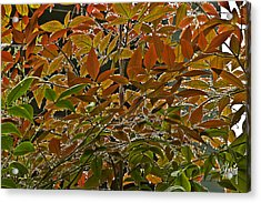 Autumn In Muttart Acrylic Print