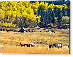 Autumn In Pagosa Acrylic Print by Johanne Peale