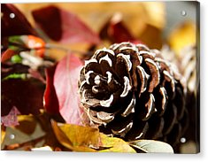 Autumn In Russet Acrylic Print by Theresa Johnson