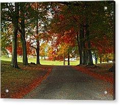 Autumn In Studley Deer Park Acrylic Print by Steve Watson