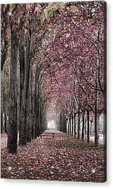 Autumn In The Grove Acrylic Print by Angel Jesus De la Fuente