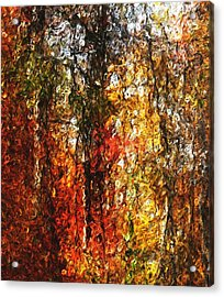 Autumn In The Woods Acrylic Print by David Lane