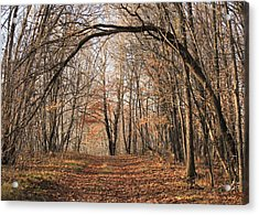 Acrylic Print featuring the photograph Autumn In The Woods by Penny Meyers