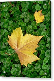 Autumn Just Began Acrylic Print by Philippe Taka