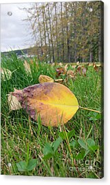 Autumn Leaf On Green Acrylic Print by Michelle Bergersen