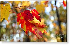 Autumn Leaves Acrylic Print by Adrian LaRoque