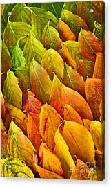 Autumn Leaves Arrangement Acrylic Print by Elena Elisseeva