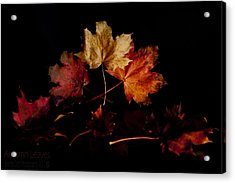 Acrylic Print featuring the photograph Autumn Leaves by Beverly Cash