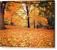 Autumn Leaves - Central Park - New York City Acrylic Print by Vivienne Gucwa