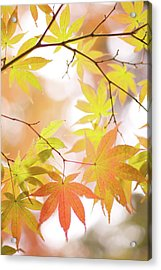 Autumn Leaves Acrylic Print by Cocoaloco