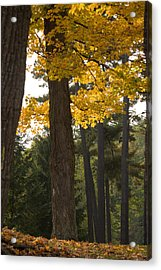 Acrylic Print featuring the photograph Autumn Leaves by Darleen Stry