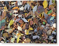 Acrylic Print featuring the photograph Autumn Leaves by David Grant