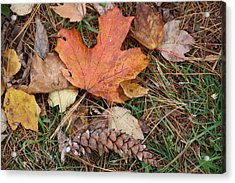 Acrylic Print featuring the photograph Autumn Leaves by Donna  Smith