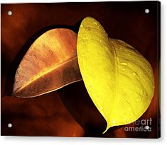 Autumn Leaves Acrylic Print by Ellen Cotton