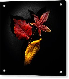 Autumn Leaves Acrylic Print by Gerlinde Keating - Galleria GK Keating Associates Inc