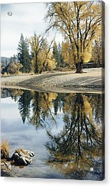 Autumn Leaves Growing Along A Gravel Acrylic Print by J. Baylor Roberts