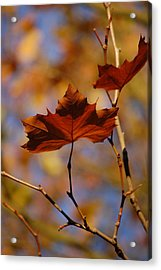 Autumn Leaves II Acrylic Print by Dickon Thompson