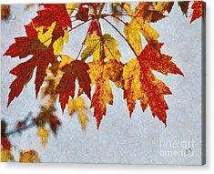 Autumn Leaves IIi Acrylic Print by Billie-Jo Miller
