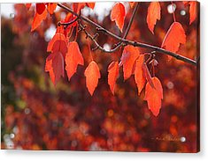Autumn Leaves In Medford Acrylic Print by Mick Anderson