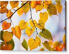 Autumn Leaves Acrylic Print by Jenny Rainbow