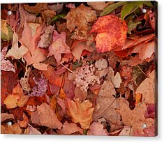 Acrylic Print featuring the photograph Autumn Leaves by Karen Molenaar Terrell