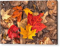 Autumn Leaves Acrylic Print by Matt Dobson