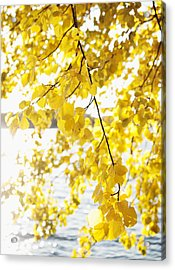 Autumn Leaves On Branch With Lake In Background, Close-up Acrylic Print by Johner Images